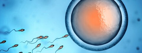 Infertility-fertility-specialties